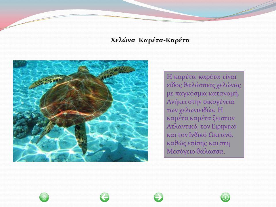 Η καρέτα καρέτα είναι είδος θαλάσσιας χελώνας με παγκόσμια κατανομή.