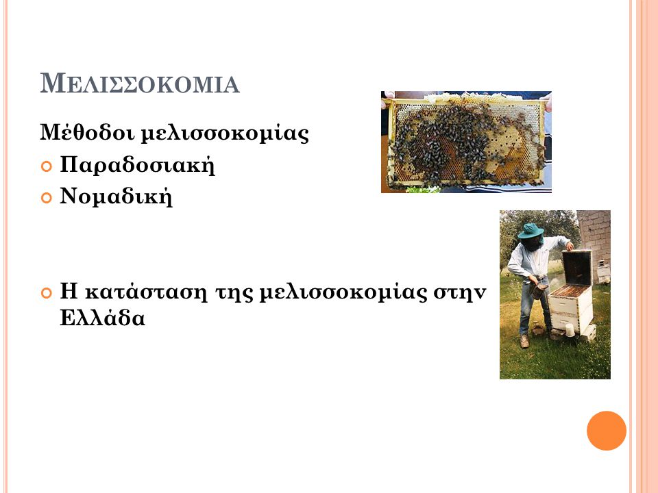 Μ ΕΛΙΣΣΟΚΟΜΙΑ Μέθοδοι μελισσοκομίας Παραδοσιακή Νομαδική Η κατάσταση της μελισσοκομίας στην Ελλάδα