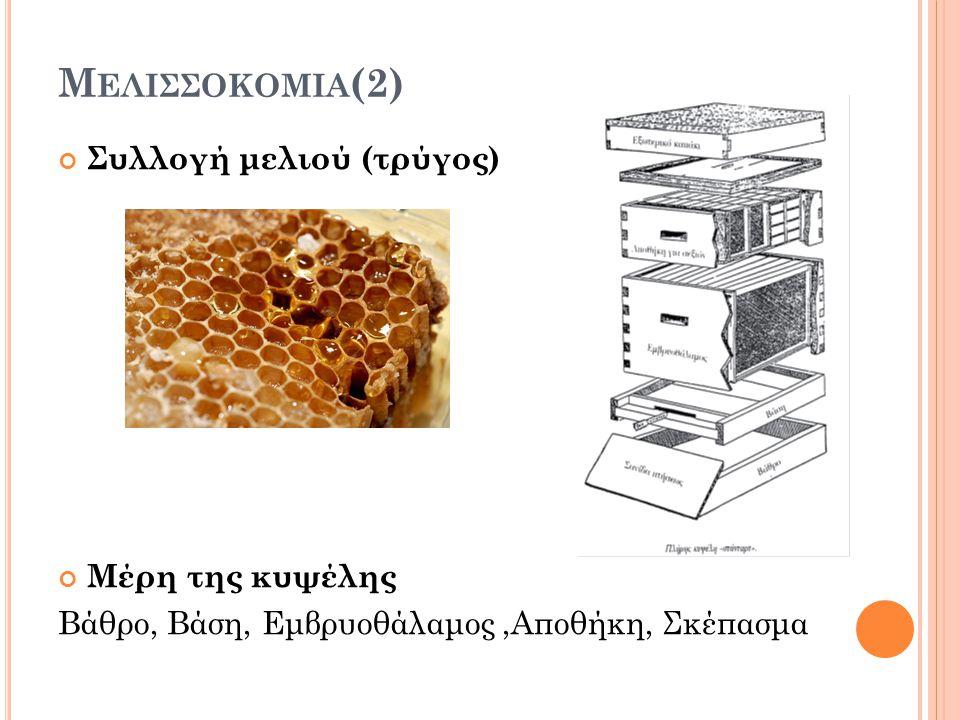 Μ ΕΛΙΣΣΟΚΟΜΙΑ (2) Συλλογή μελιού (τρύγος) Μέρη της κυψέλης Βάθρο, Βάση, Εμβρυοθάλαμος,Αποθήκη, Σκέπασμα