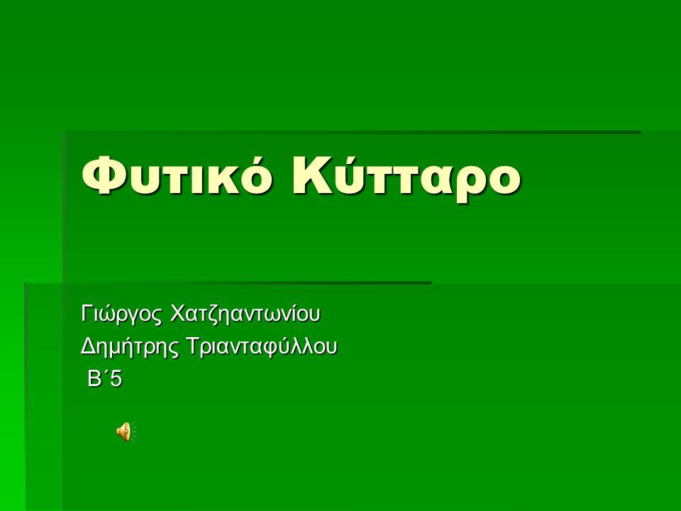 Φυτικό Κύτταρο Γιώργος Χατζηαντωνίου Δημήτρης Τριανταφύλλου Β΄5 Β΄5