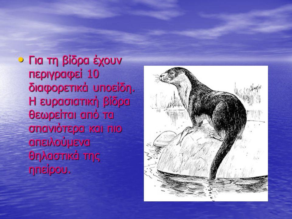 Για τη βίδρα έχουν περιγραφεί 10 διαφορετικά υποείδη. Η ευρασιατική βίδρα θεωρείται από τα σπανιότερα και πιο απειλούμενα θηλαστικά της ηπείρου. Για τ