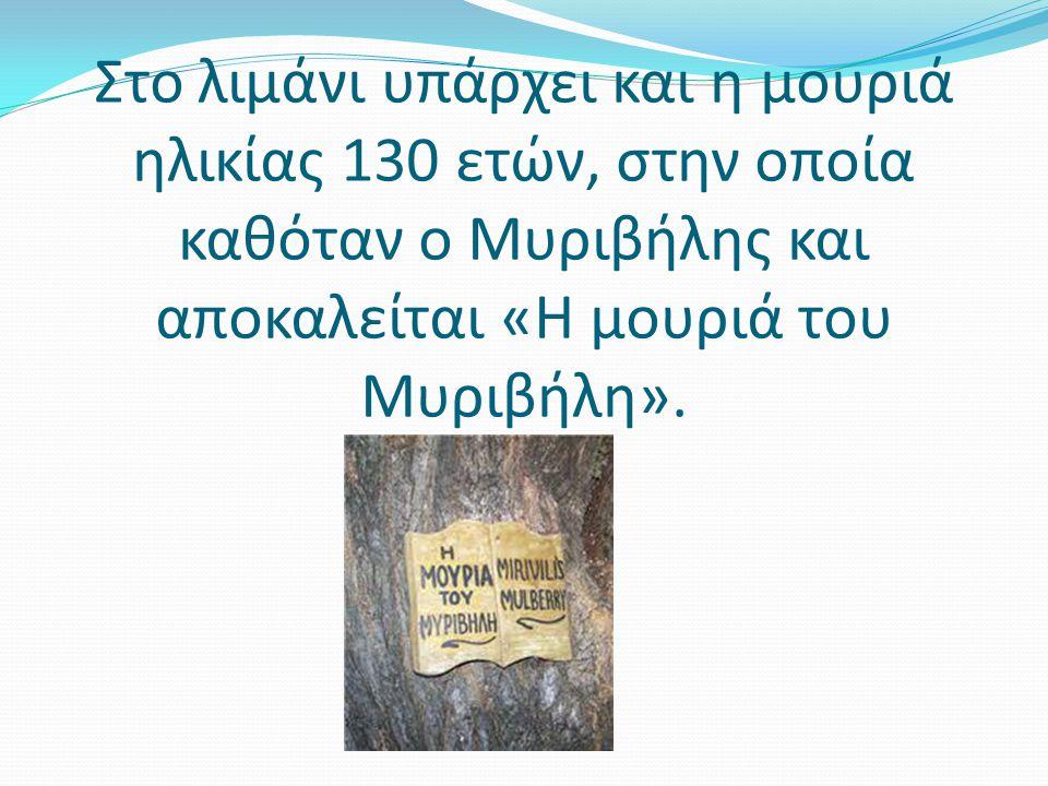 Στο λιμάνι υπάρχει και η μουριά ηλικίας 130 ετών, στην οποία καθόταν ο Μυριβήλης και αποκαλείται «Η μουριά του Μυριβήλη».