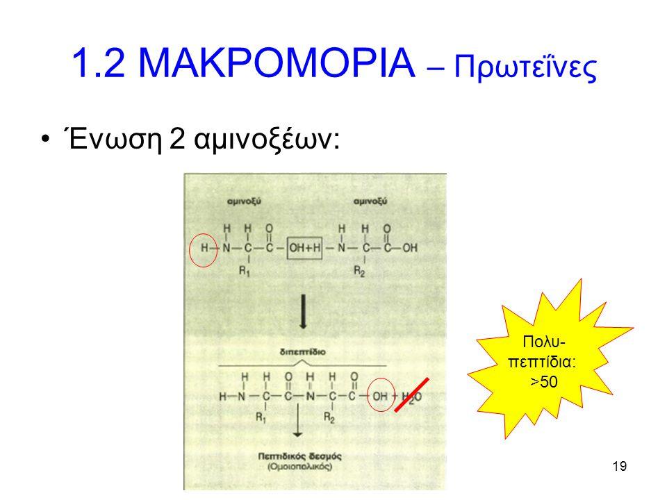 19 1.2 ΜΑΚΡΟΜΟΡΙΑ – Πρωτεΐνες Ένωση 2 αμινοξέων: Πολυ- πεπτίδια: >50