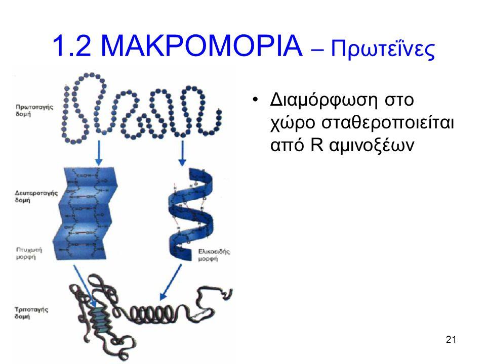21 1.2 ΜΑΚΡΟΜΟΡΙΑ – Πρωτεΐνες Διαμόρφωση στο χώρο σταθεροποιείται από R αμινοξέων