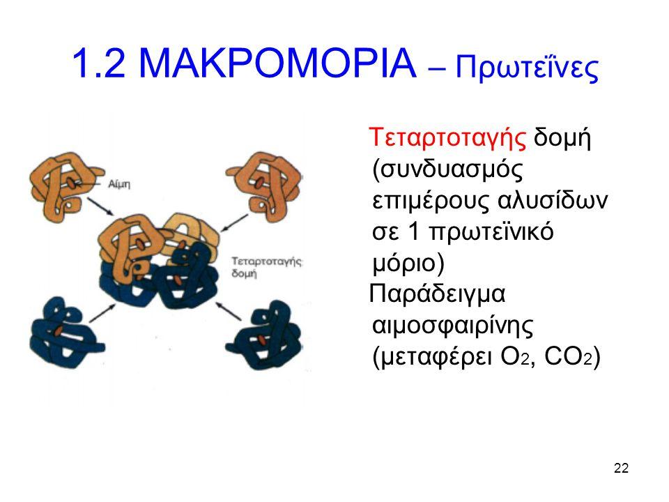 22 1.2 ΜΑΚΡΟΜΟΡΙΑ – Πρωτεΐνες Τεταρτοταγής δομή (συνδυασμός επιμέρους αλυσίδων σε 1 πρωτεϊνικό μόριο) Παράδειγμα αιμοσφαιρίνης (μεταφέρει Ο 2, CO 2 )