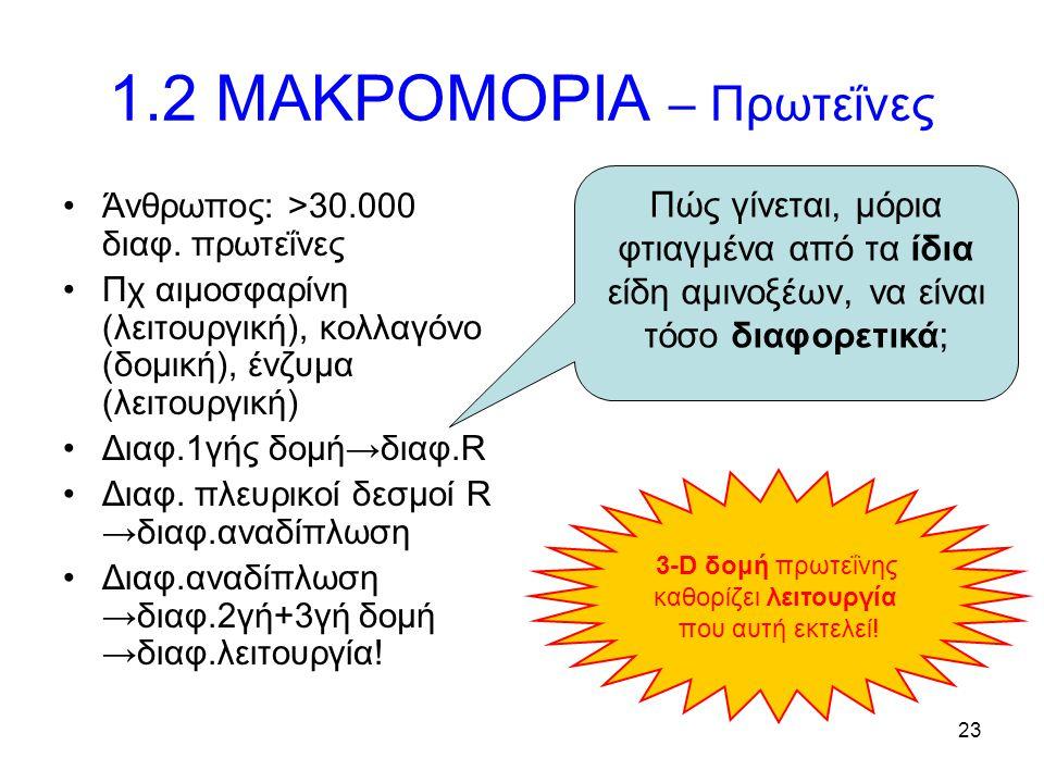 23 1.2 ΜΑΚΡΟΜΟΡΙΑ – Πρωτεΐνες Άνθρωπος: >30.000 διαφ. πρωτεΐνες Πχ αιμοσφαρίνη (λειτουργική), κολλαγόνο (δομική), ένζυμα (λειτουργική) Διαφ.1γής δομή→