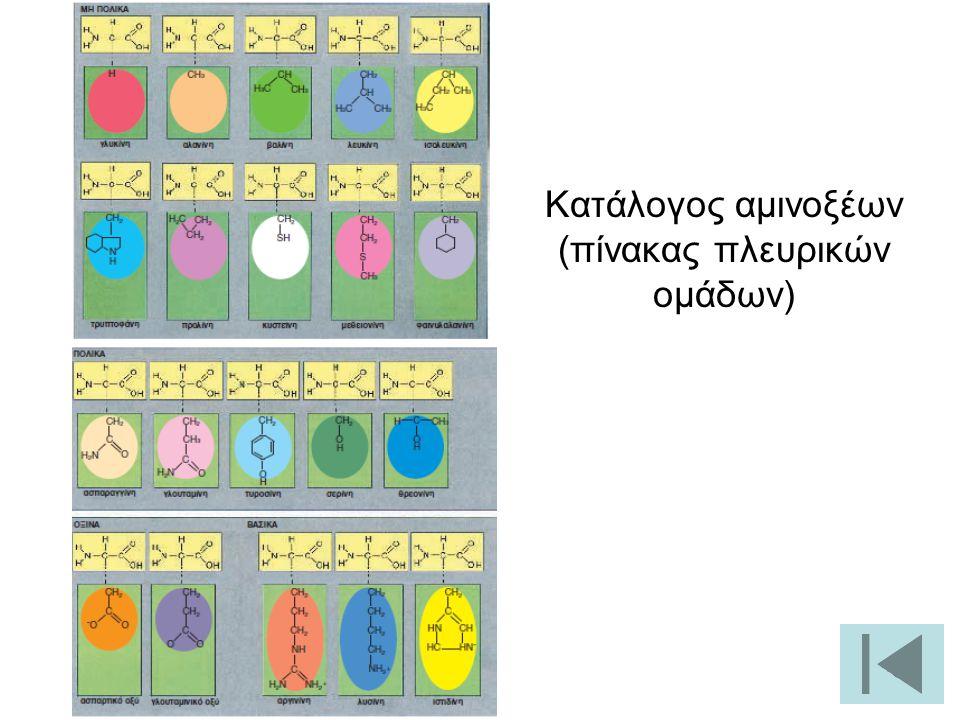 28 Κατάλογος αμινοξέων (πίνακας πλευρικών ομάδων)