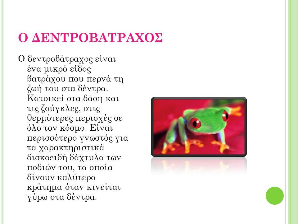 Ο ΔΕΝΤΡΟΒΑΤΡΑΧΟΣ O δεντροβάτραχος είναι ένα μικρό είδος βατράχου που περνά τη ζωή του στα δέντρα. Kατοικεί στα δάση και τις ζούγκλες, στις θερμότερες