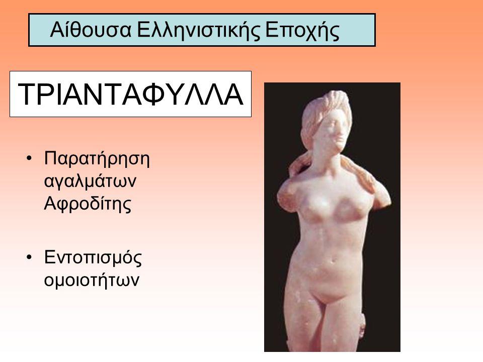 ΤΡΙΑΝΤΑΦΥΛΛΑ Παρατήρηση αγαλμάτων Αφροδίτης Εντοπισμός ομοιοτήτων Αίθουσα Ελληνιστικής Εποχής