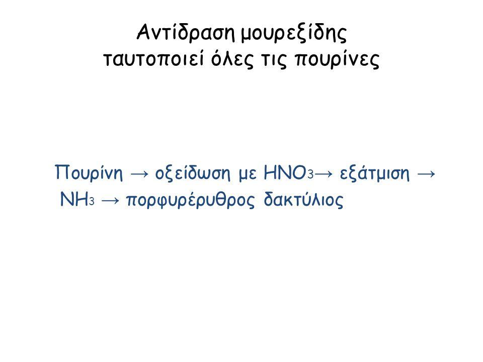 Αντίδραση μουρεξίδης ταυτοποιεί όλες τις πουρίνες Πουρίνη → οξείδωση με HNO 3 → εξάτμιση → ΝΗ 3 → πορφυρέρυθρος δακτύλιος