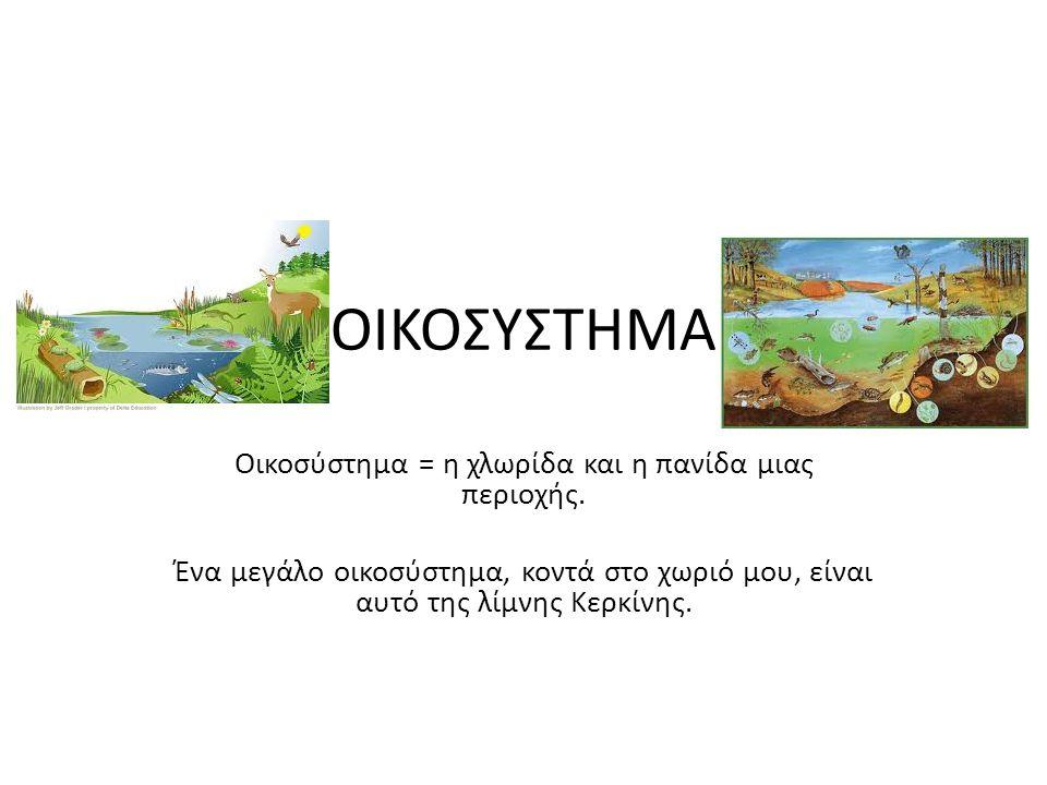 ΟΙΚΟΣΥΣΤΗΜΑ Οικοσύστημα = η χλωρίδα και η πανίδα μιας περιοχής.