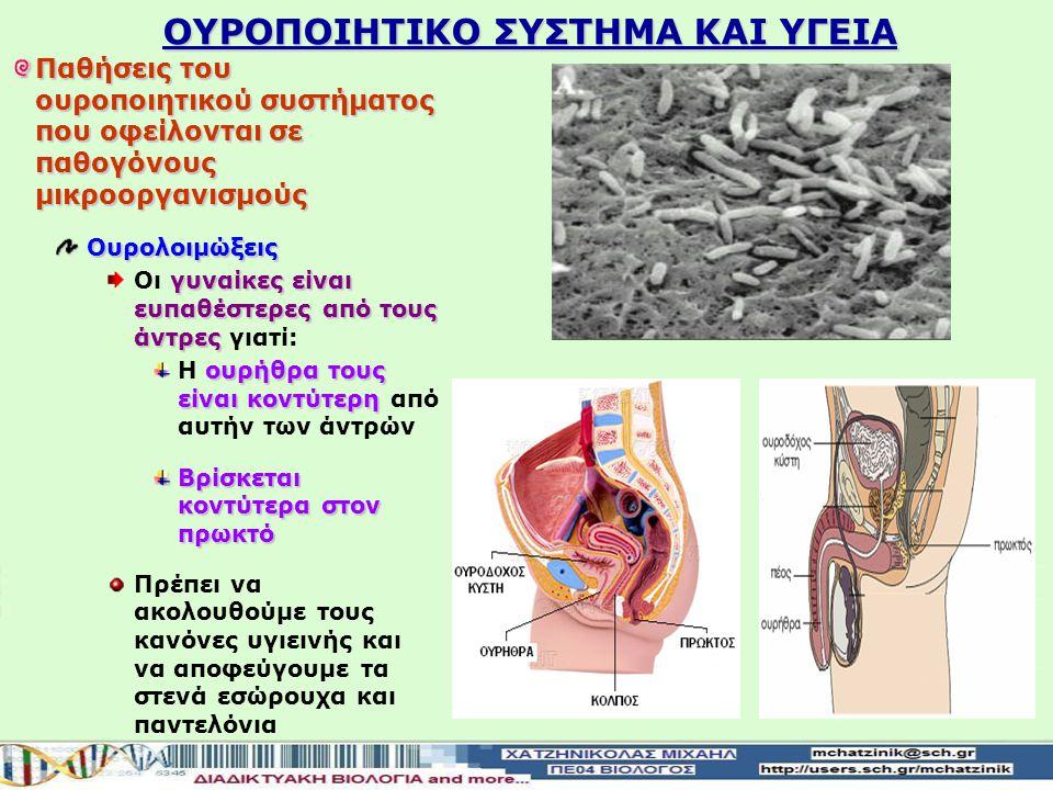 Αποβάλει τις άχρηστες ουσίες από το σώμα μας Τα ούρα απομακρύνονται με τους ουρητήρες Τα ούρα απομακρύνονται από τους νεφρούς με τους ουρητήρες Καταλή