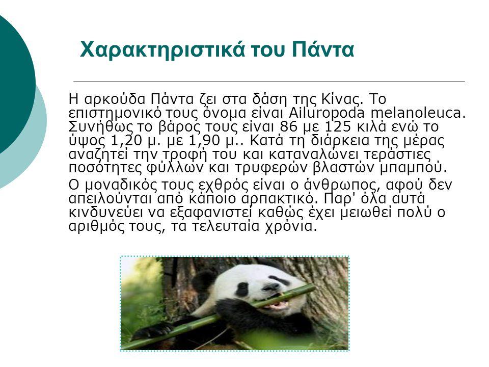 Η αρκούδα Πάντα ζει στα δάση της Κίνας. Το επιστημονικό τους όνομα είναι Ailuropoda melanoleuca. Συνήθως το βάρος τους είναι 86 με 125 κιλά ενώ το ύψο