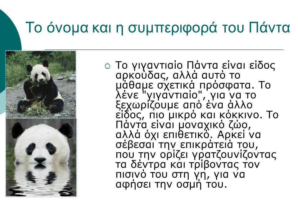 Το όνομα και η συμπεριφορά του Πάντα  To γιγαντιαίο Πάντα είναι είδος αρκούδας, αλλά αυτό το μάθαμε σχετικά πρόσφατα. Το λένε