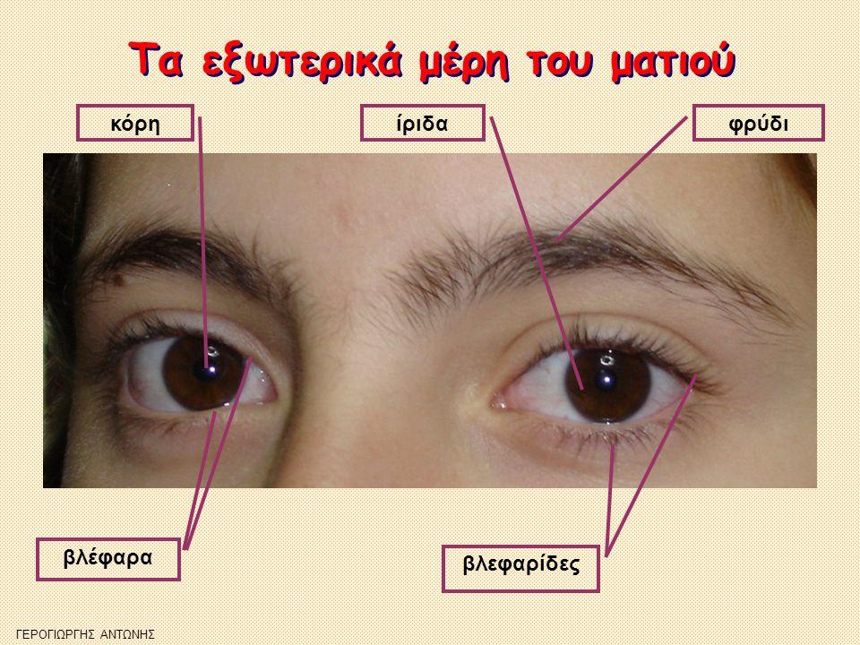 Ο βολβός του ματιού Ο βολβός του ματιού Το τμήμα του ματιού που έχει (περίπου) σφαιρικό σχήμα και μέσα σ' αυτό βρίσκονται τα αισθητήρια όργανα της όρασης λέγεται βολβός.