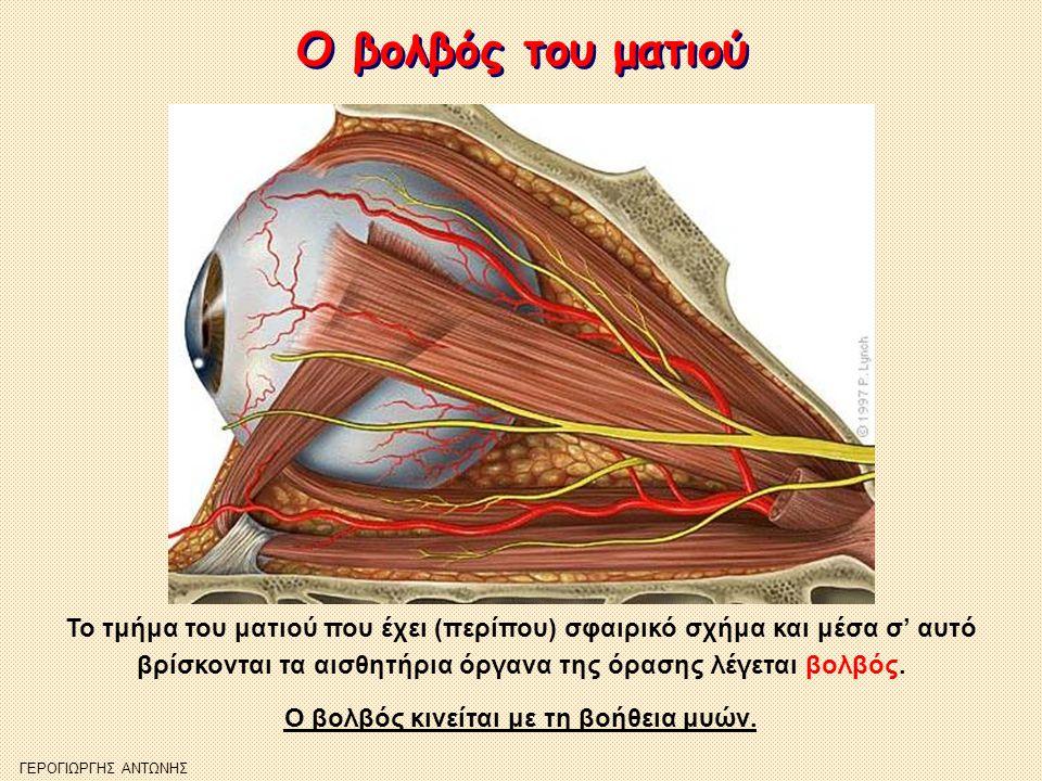 Ο βολβός του ματιού Ο βολβός του ματιού Το τμήμα του ματιού που έχει (περίπου) σφαιρικό σχήμα και μέσα σ' αυτό βρίσκονται τα αισθητήρια όργανα της όρα