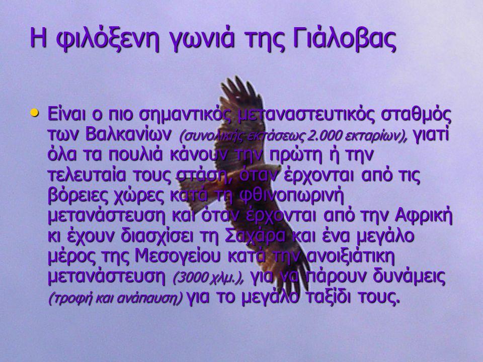 Η φιλόξενη γωνιά της Γιάλοβας Είναι ο πιο σημαντικός μεταναστευτικός σταθμός των Βαλκανίων (συνολικής εκτάσεως 2.000 εκταρίων), γιατί όλα τα πουλιά κάνουν την πρώτη ή την τελευταία τους στάση, όταν έρχονται από τις βόρειες χώρες κατά τη φθινοπωρινή μετανάστευση και όταν έρχονται από την Αφρική κι έχουν διασχίσει τη Σαχάρα και ένα μεγάλο μέρος της Μεσογείου κατά την ανοιξιάτικη μετανάστευση (3000 χλμ.), για να πάρουν δυνάμεις (τροφή και ανάπαυση) για το μεγάλο ταξίδι τους.