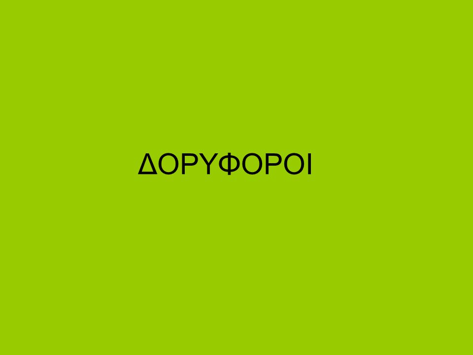 ΔΟΡΥΦΟΡΟΙ