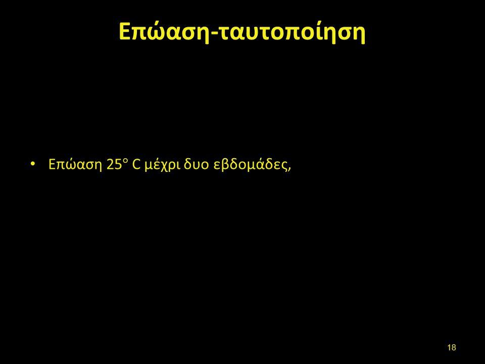 Επώαση-ταυτοποίηση Επώαση 25 ° C μέχρι δυο εβδομάδες, 18