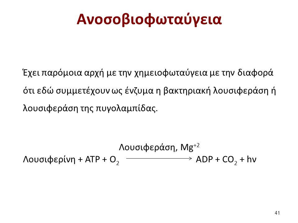 Ανοσοβιοφωταύγεια 41 Έχει παρόμοια αρχή με την χημειοφωταύγεια με την διαφορά ότι εδώ συμμετέχουν ως ένζυμα η βακτηριακή λουσιφεράση ή λουσιφεράση της πυγολαμπίδας.