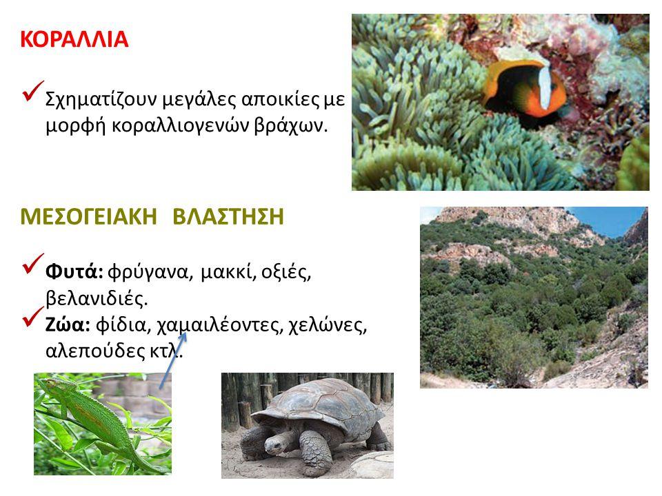 ΚΟΡΑΛΛΙΑ Σχηματίζουν μεγάλες αποικίες με μορφή κοραλλιογενών βράχων. ΜΕΣΟΓΕΙΑΚΗ ΒΛΑΣΤΗΣΗ Φυτά: φρύγανα, μακκί, οξιές, βελανιδιές. Ζώα: φίδια, χαμαιλέο