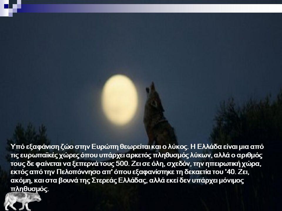· Συγκέντρωση στοιχείων για την κατανομή και τον πληθυσμό του λύκου στην Ελλάδα · Προληπτικά μέτρα για την προστασία του κτηνοτροφικού κεφαλαίου · Δρά