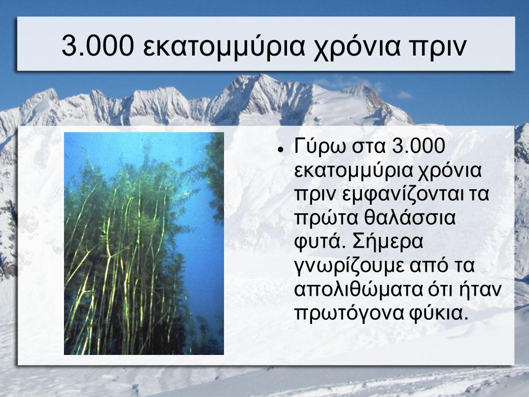 3.000 εκατομμύρια χρόνια πριν Γύρω στα 3.000 εκατομμύρια χρόνια πριν εμφανίζονται τα πρώτα θαλάσσια φυτά. Σήμερα γνωρίζουμε από τα απολιθώματα ότι ήτα