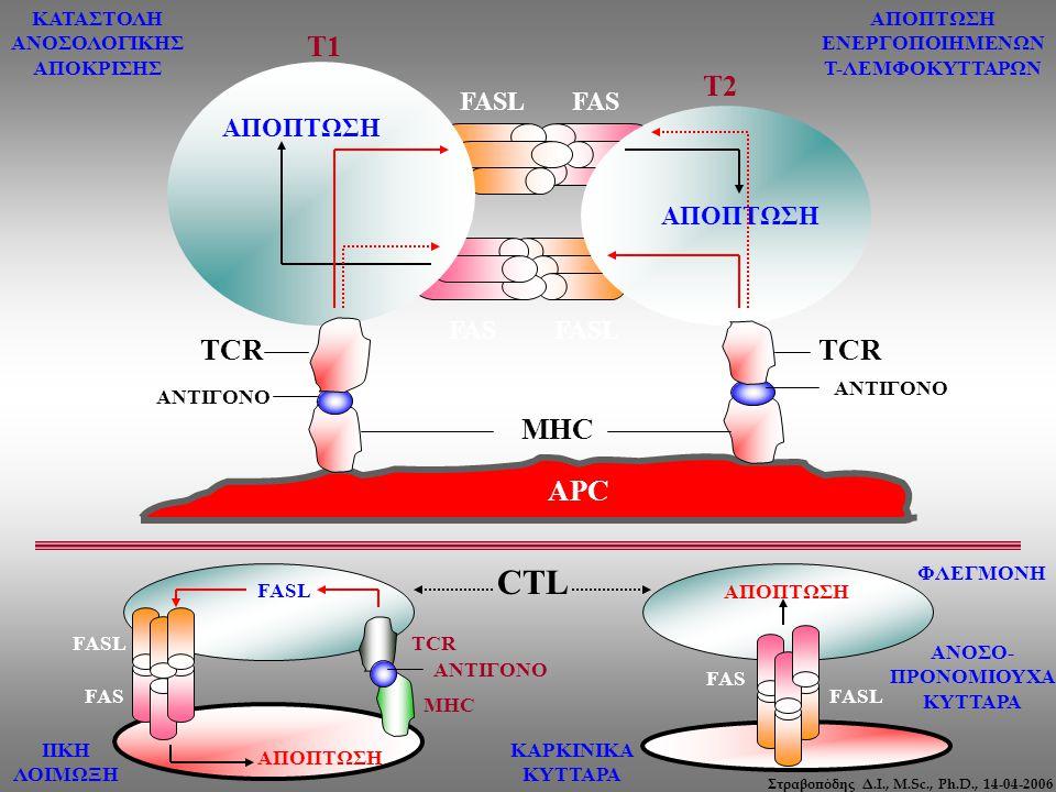 Στραβοπόδης Δ.Ι., M.Sc., Ph.D., 14-04-2006 FASL FAS FASL FAS APC ΑΝΤΙΓΟΝΟ Τ1 Τ2 MHC TCR ΑΠΟΠΤΩΣΗ FASL ΑΠΟΠΤΩΣΗ FASL FAS TCR MHC ΑΝΤΙΓΟΝΟ CTL ΙΙΚΗ ΛΟΙΜ