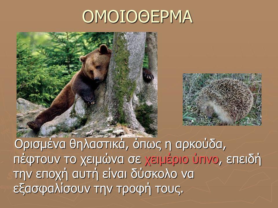 ΟΜΟΙΟΘΕΡΜΑ Ορισμένα θηλαστικά, όπως η αρκούδα, πέφτουν το χειμώνα σε χειμέριο ύπνο, επειδή την εποχή αυτή είναι δύσκολο να εξασφαλίσουν την τροφή τους