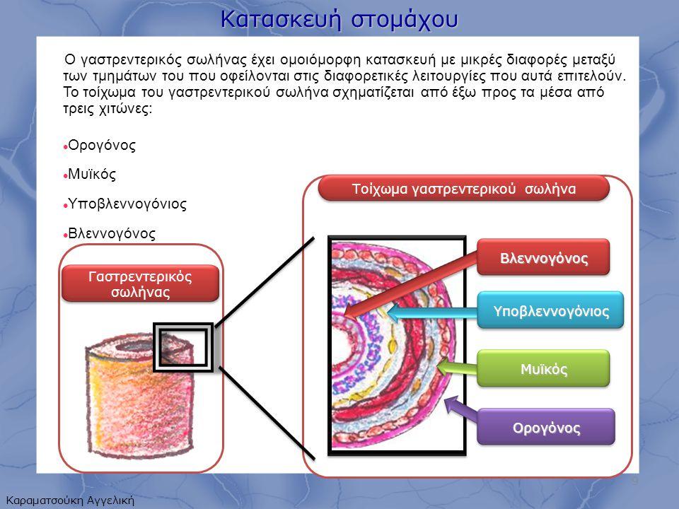 2 στόμια  Καρδιακό  Πυλωρικό 2 μοίρες  Κυρίως στομάχι  Πυλωρική 3 τύποι  Ορθοτονικός (J)  Υπερτονικός  Υποτονικός Στηρίζεται από  Οισοφάγο  1