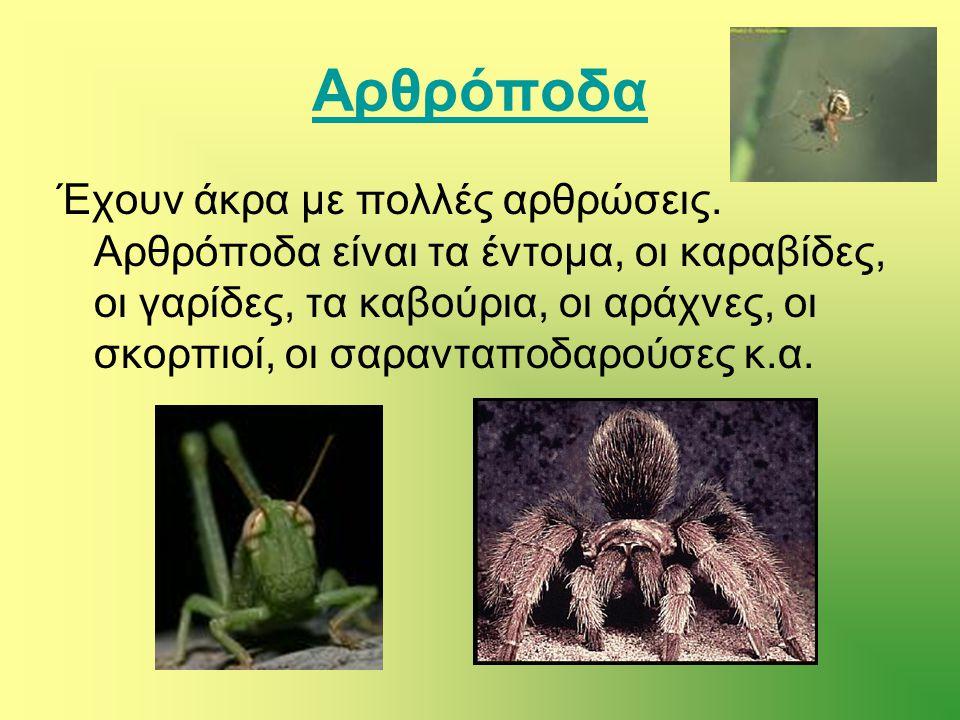 Αρθρόποδα Έχουν άκρα με πολλές αρθρώσεις. Αρθρόποδα είναι τα έντομα, οι καραβίδες, οι γαρίδες, τα καβούρια, οι αράχνες, οι σκορπιοί, οι σαρανταποδαρού