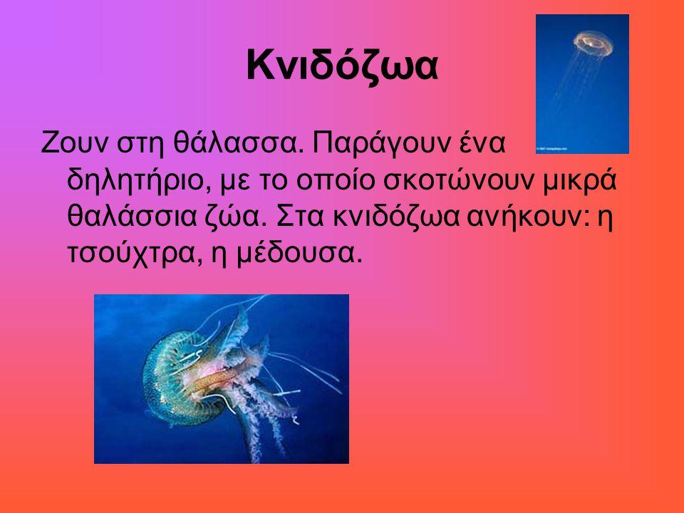 Κνιδόζωα Ζουν στη θάλασσα. Παράγουν ένα δηλητήριο, με το οποίο σκοτώνουν μικρά θαλάσσια ζώα. Στα κνιδόζωα ανήκουν: η τσούχτρα, η μέδουσα.