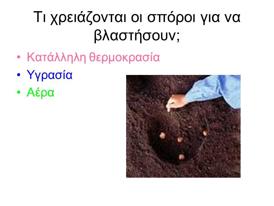 Τι χρειάζονται οι σπόροι για να βλαστήσουν; Κατάλληλη θερμοκρασία Υγρασία Αέρα