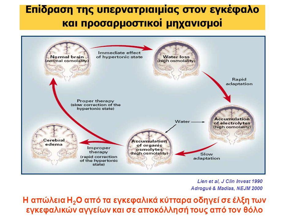 Επίδραση της υπερνατριαιμίας στον εγκέφαλο και προσαρμοστικοί μηχανισμοί Lien et al, J Clin Invest 1990 Adrogué & Madias, NEJM 2000 Η απώλεια Η 2 Ο από τα εγκεφαλικά κύτταρα οδηγεί σε έλξη των εγκεφαλικών αγγείων και σε αποκόλλησή τους από τον θόλο