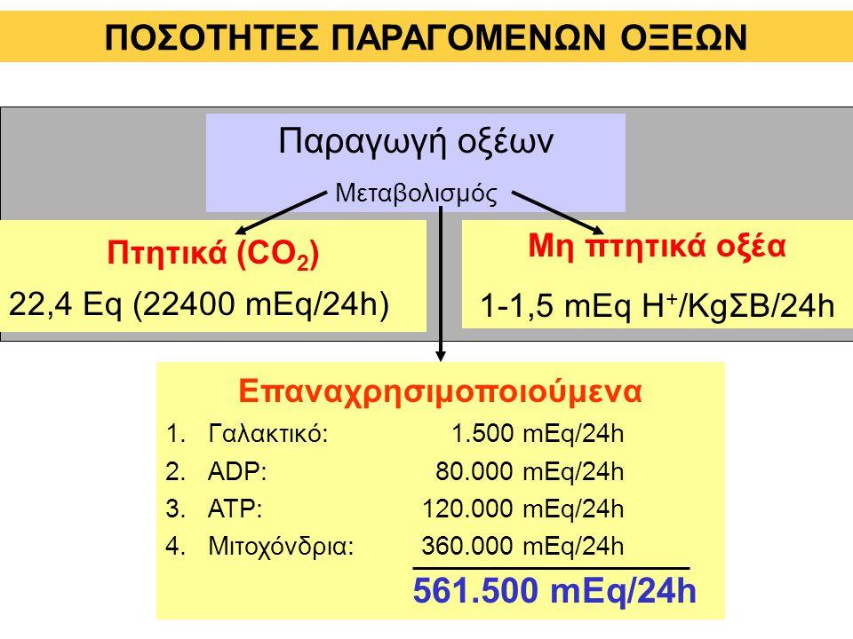 ΠΟΣΟΤΗTΕΣ ΠΑΡΑΓΟΜΕΝΩΝ ΟΞΕΩΝ Πτητικά (CO 2 ) 22,4 Eq (22400 mEq/24h) Μη πτητικά οξέα 1-1,5 mEq H + /KgΣΒ/24h Παραγωγή οξέων Μεταβολισμός Επαναχρησιμοποιούμενα 1.Γαλακτικό: 1.500 mEq/24h 2.ADP: 80.000 mEq/24h 3.ATP:120.000 mEq/24h 4.Μιτοχόνδρια:360.000 mEq/24h 561.500 mEq/24h