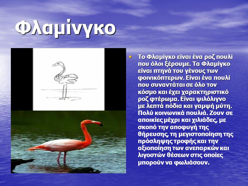 Φλαμίνγκο Το Φλαμίγκο είναι ένα ροζ πουλί που όλοι ξέρουμε. Τα Φλαμίγκο είναι πτηνά του γένους των φοινικόπτερων. Είναι ένα πουλί που συναντάται σε όλ