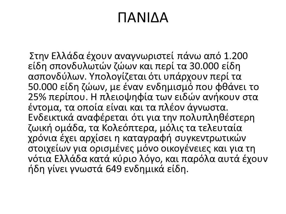 ΠΑΝΙΔΑ Στην Ελλάδα έχουν αναγνωριστεί πάνω από 1.200 είδη σπονδυλωτών ζώων και περί τα 30.000 είδη ασπονδύλων. Υπολογίζεται ότι υπάρχουν περί τα 50.00