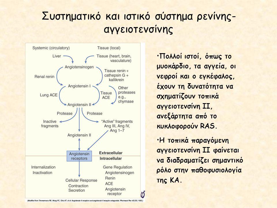 Συστηματικό και ιστικό σύστημα ρενίνης- αγγειοτενσίνης Πολλοί ιστοί, όπως το μυοκάρδιο, τα αγγεία, οι νεφροί και ο εγκέφαλος, έχουν τη δυνατότητα να σ