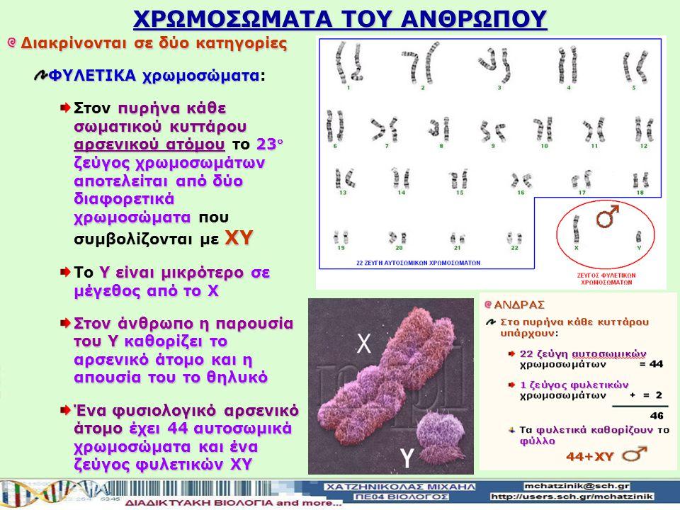 ΧΡΩΜΟΣΩΜΑΤΑ ΤΟΥ ΑΝΘΡΩΠΟΥ Διακρίνονται σε δύο κατηγορίες ΦΥΛΕΤΙΚΑ χρωμοσώματα ΦΥΛΕΤΙΚΑ χρωμοσώματα: πυρήνα κάθε σωματικού κυττάρου θηλυκού ατόμου23 ζε