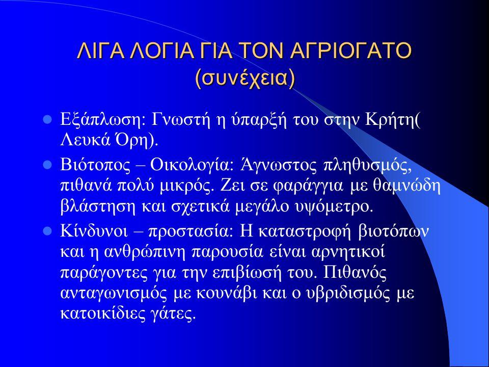 ΛΙΓΑ ΛΟΓΙΑ ΓΙΑ ΤΟΝ ΑΓΡΙΟΓΑΤΟ Felis sylvestris cretensis.