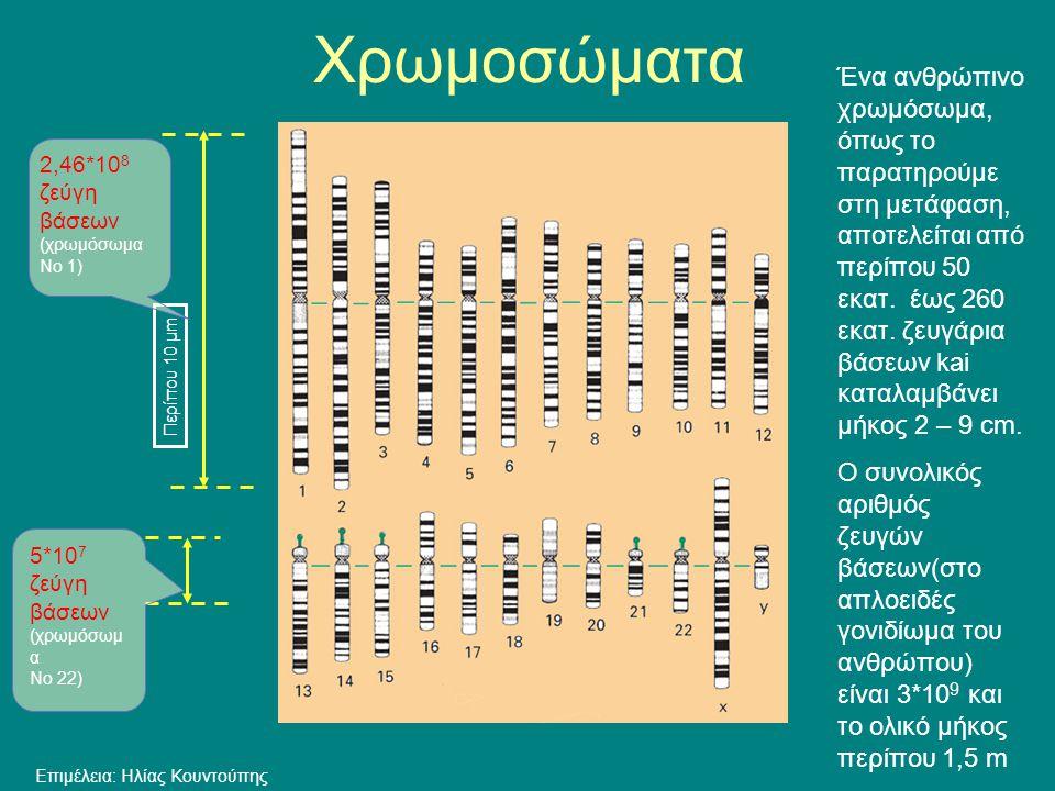 Περίπου 10 μm 2,46*10 8 ζεύγη βάσεων (χρωμόσωμα Νο 1) Ένα ανθρώπινο χρωμόσωμα, όπως το παρατηρούμε στη μετάφαση, αποτελείται από περίπου 50 εκατ. έως