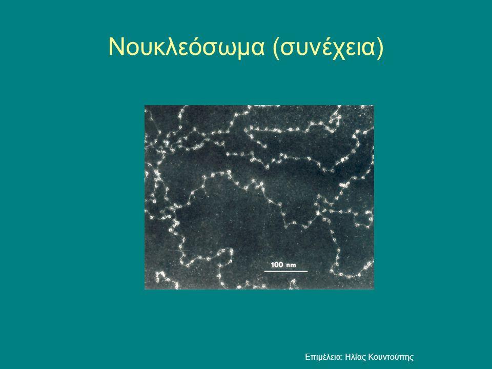 Νουκλεόσωμα (συνέχεια) Επιμέλεια: Ηλίας Κουντούπης
