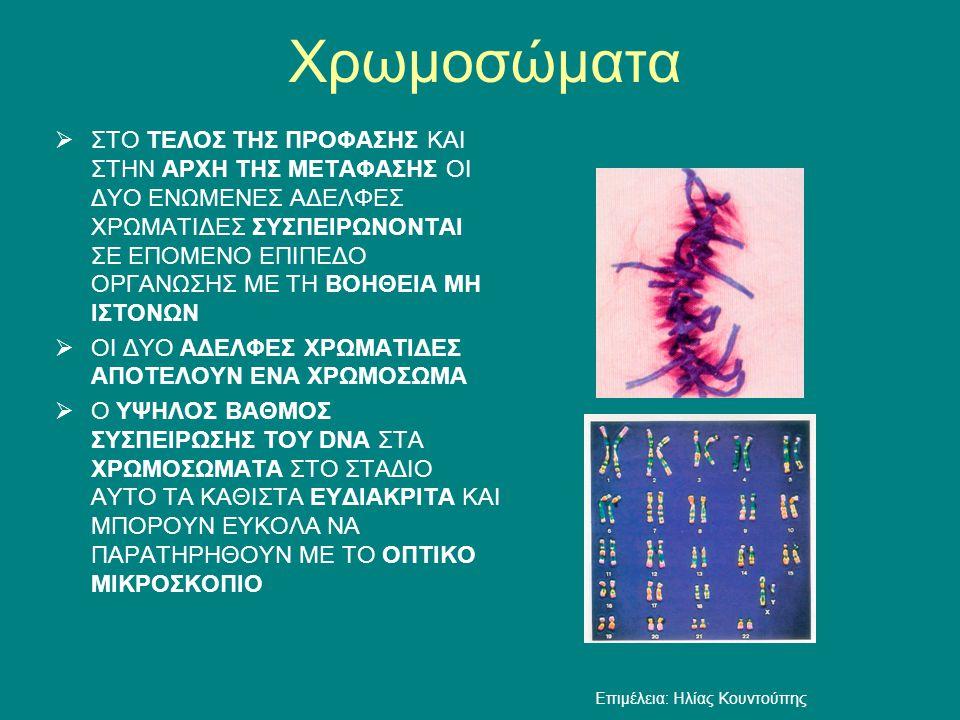 Περίπου 10 μm 2,46*10 8 ζεύγη βάσεων (χρωμόσωμα Νο 1) Ένα ανθρώπινο χρωμόσωμα, όπως το παρατηρούμε στη μετάφαση, αποτελείται από περίπου 50 εκατ.
