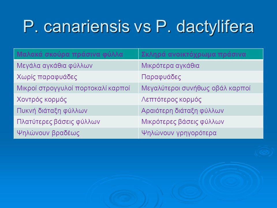  Βιολογική καταπολέμηση Υπάρχει δυνατότητα για βιολογική αντιμετώπιση με εντομοπαθογόνους μικροοργανισμούς (νηματώδεις).