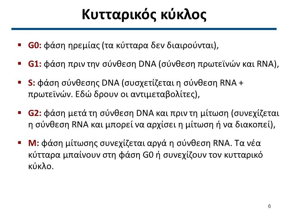 Κυτταρικός κύκλος  G0: φάση ηρεμίας (τα κύτταρα δεν διαιρούνται),  G1: φάση πριν την σύνθεση DNA (σύνθεση πρωτεϊνών και RNA),  S: φάση σύνθεσης DNA