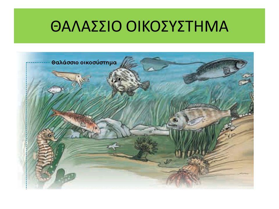 ΘΑΛΑΣΣΙΟ ΟΙΚΟΣΥΣΤΗΜΑ