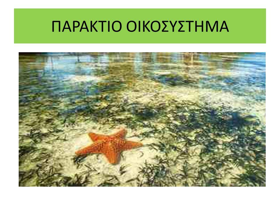 ΠΑΡΑΚΤΙΟ ΟΙΚΟΣΥΣΤΗΜΑ