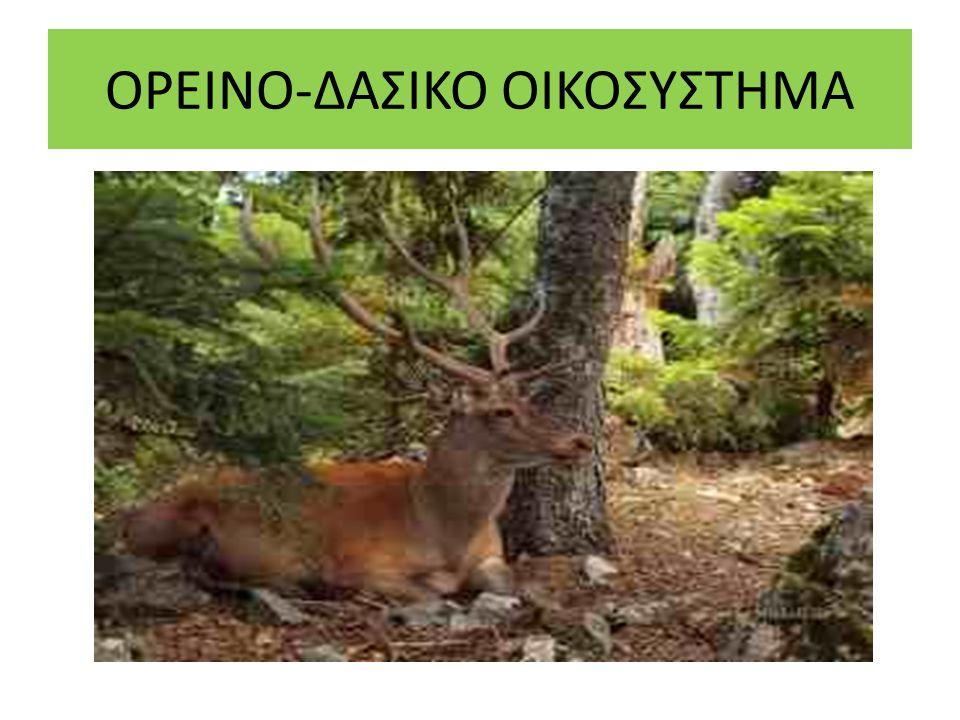 ΠΕΔΙΝΟ-ΑΓΡΟΤΙΚΟ ΟΙΚΟΣΥΣΤΗΜΑ