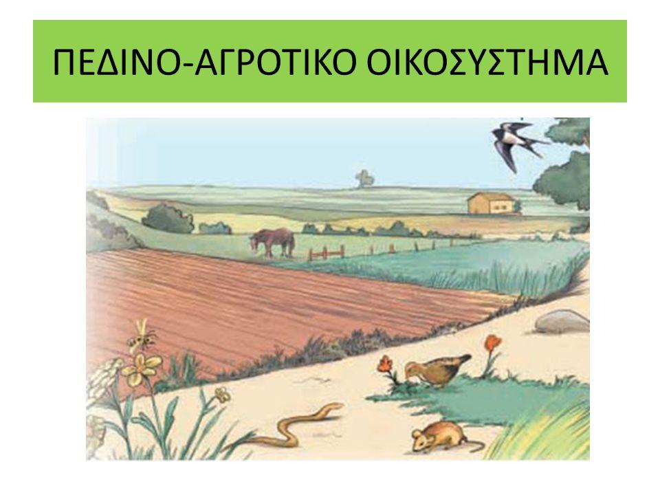 ΥΔΡΟΒΙΟΤΟΠΟΣ