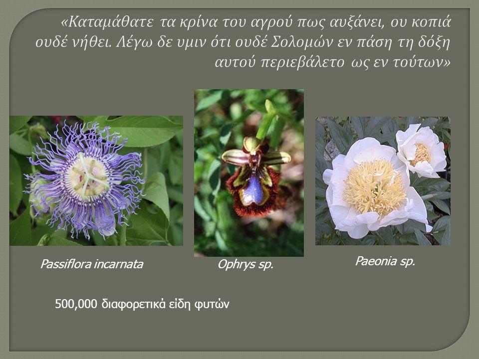 Passiflora incarnataOphrys sp. Paeonia sp. 500,000 διαφορετικά είδη φυτών